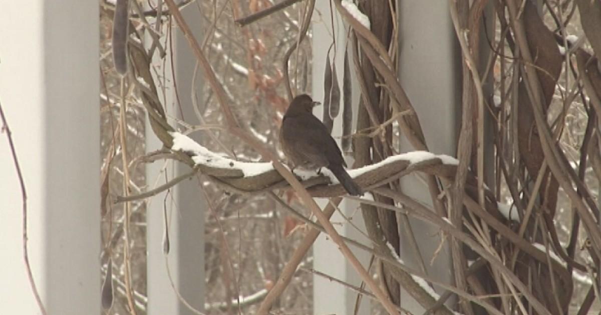 sachsen ganz vorn bei vogelz hlung sachsen fernsehen. Black Bedroom Furniture Sets. Home Design Ideas