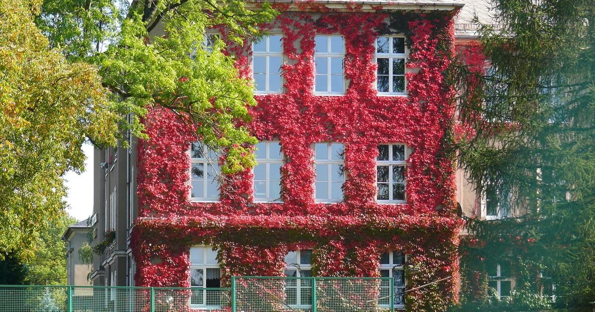 Chemnitz soll grüner werden