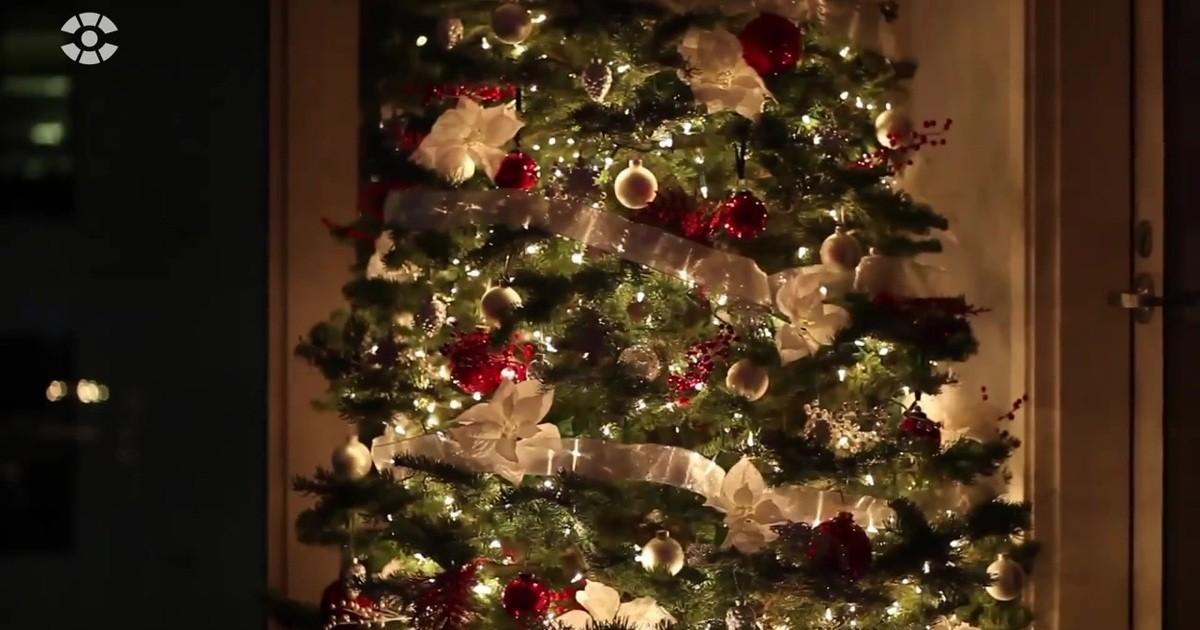 Weihnachtsbaum Kaufen Chemnitz.Welcher Baum Ist Der Richtige Sachsen Fernsehen