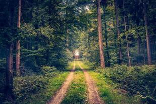 Wald, © Unsplah