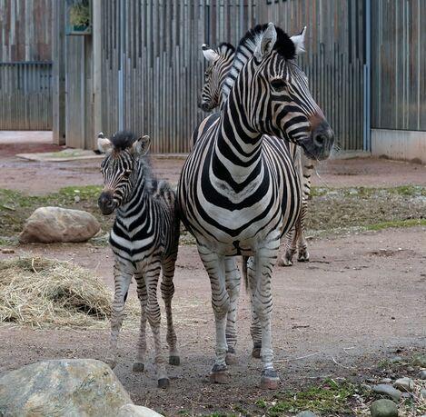 © Zoo Dresden