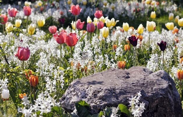 © Fotolia-Blütenblättchen