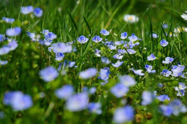 © www.picabay.com / Judihui