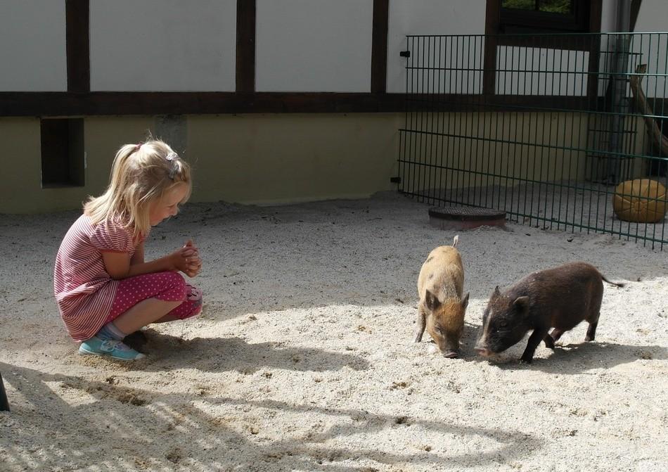 © Peggy Riedel/Tierpark Chemnitz/Stadt Chemnitz