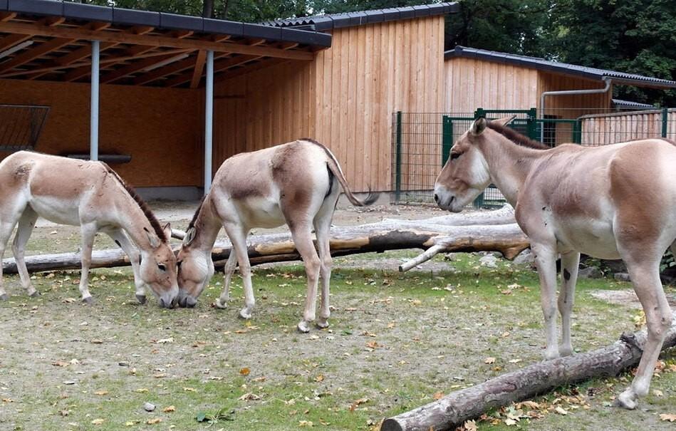 © Riedel / Tierpark Chemnitz