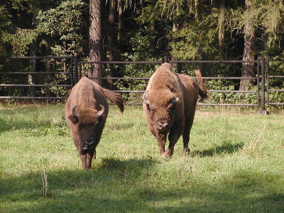 © Tierpark Chemnitz, Klösters