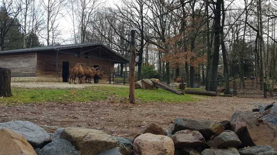 © Jan Klösters/Tierpark Chemnitz